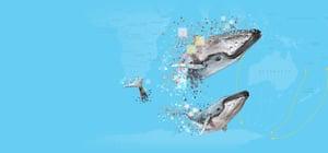 Whale Migration - Blue Background